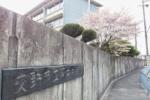 あっ!『桜』や!と思って近づいてみたらちゃうヤツや!@交野第四中学校の正門のところ
