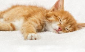 猫の睡眠時間について思うこと