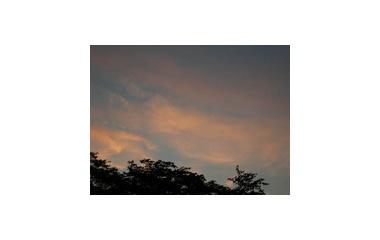 『朝の帰還』の画像