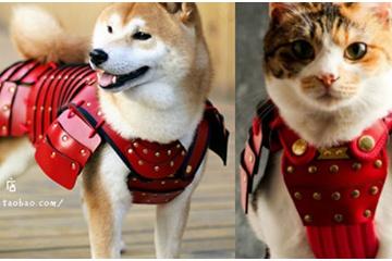 海外「うちの子にも着せたい!」ペット用鎧が海外で大反響!真田幸村モデルまであり
