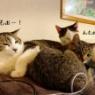 緊急事態宣言…こんな時も猫は猫。月は月。