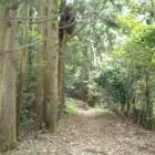 『星上山から京羅木山への縦走ハイキング』の画像