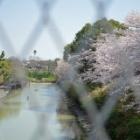 『お花見2018☆長池自然公園』の画像