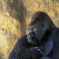 2009年4月19日は、「飼育の日」