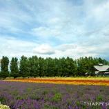 『富良野美瑛2017:ファーム富田にリベンジ』の画像