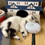 『寝相のクセが強い猫』の画像