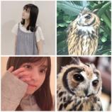 『【乃木坂46】完全一致www ファンが作った遠藤さくらとフクロウの比較画像一覧がこちらwwwwww』の画像