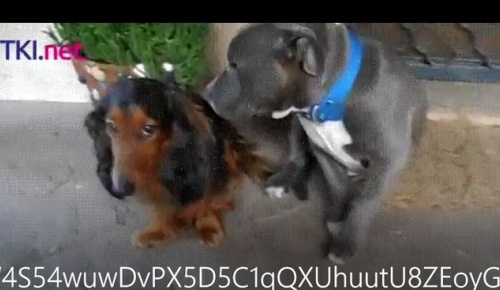 海外「犯人(犬)はどっちだ」 いたずらした犬が飼い主から怒られるお約束動画が話題に