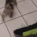 【子ネコ】 床の掃除でもしようかな。こにょやろ~! → 2匹の子猫、荒ぶります…