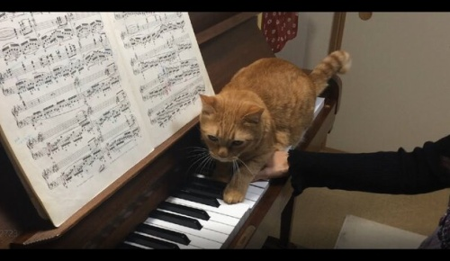 愛猫に演奏を邪魔される日本人ピアニストの人気映像に海外ほっこり