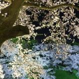 『「明珠在掌」消えた里桜と日本犬』の画像