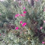 『野に咲く花の強さ 長谷川祐子』の画像