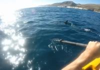 海のど真ん中でカヤックに乗っていた釣り人、シュモクザメに付きまとわれてオールで格闘