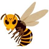 【閲覧注意】最強生物スズメバチさん、とんでもない相手に食べられてしまうwwwwwwwww