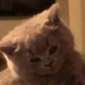 子ネコに「キス」をしようとする。今はそういう気分じゃないにょ → 子猫はこうした…