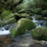 『いつか行きたい日本の名所 白谷雲水峡』の画像