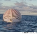 「エイリアンか?」漁師親子が沖合で見つけた奇妙な球体の正体