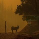 『カリフォルニアの山火事に巻き込まれた動物たち』の画像