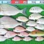 台風の湾内ハイカラ釣りで良型マダイ、ヒョウゴ、キビレ、ハマチ、ネイリ、エバ、ヒラメなど!