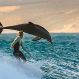 『イルカと一緒に サーフィング! #サーフィン』の画像