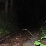 『【肝試し】森から突然消えたC子「私、森に入ってないよ・・・」』の画像