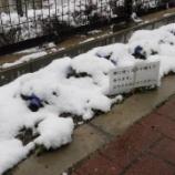 『グルッポの冬景色(2/18)』の画像