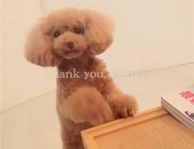 篠田麻里子の愛犬の「早すぎる死去」が話題にwww