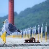 『夏季休業日(8/11~15)のお知らせ』の画像