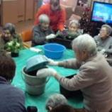 『今日のグループホーム(鉢植え)』の画像
