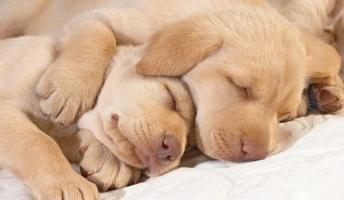短時間睡眠の方法を教えてみようと思う