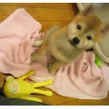 『愛犬と暮らす住まい(笑)』の画像