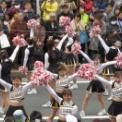 第18回湘南台ファンタジア2016 その53(明治学院大学応援団チアガール)