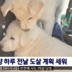 【韓国】「大事に育てる」という条件で譲り受けた犬2匹、1時間後に食べる!