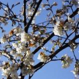 『階段つくり・春のお別れ』の画像