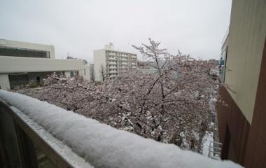 『LAOWA15mmF4によるたまプラーザ桜と雪景色 2020/04/03』の画像