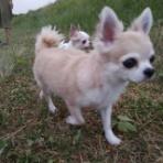 Chihuahua garden