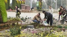 【中国】市民殺到「それっ」で菊の鉢植え30万鉢略奪…警備員「多勢に無勢」