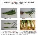 【山菜】スイセン食べた夫婦が食中毒 ニラと間違い