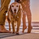 『犬の散歩してる時に出会ったおじいちゃん』の画像