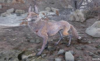 キツネ(Fox)