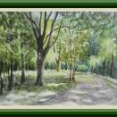 水彩画 木漏れ日 昭和記念公園  養生をしよう