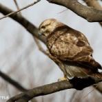 野鳥観察STYLE