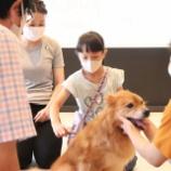 『\中日新聞掲載/8/2、8/10に無料体験会開催!ふれあいながら学べるこれからの犬との暮らし方『みんなで保護犬飼い主会員』』の画像