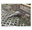 「奇妙な」生き物が深夜の繁華街に出没… 犬に襲われていたところを保護