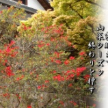 『山菜シーズンそろそろ終わり』の画像