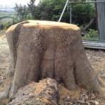 ペットコーナーハヤセガワ 海老名の残像