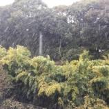 『浜松各地で初雪を観測!今日(1/15)は道路の凍結に要注意を...!』の画像