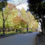 『【道筋の画像に差し替え】東京都庭園美術館日本庭園に行ってきました』の画像