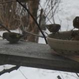 『小鳥さんたち』の画像