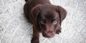 犬嫌いの私が平日に一人歩いていると、リードをつけた単独の犬に絡まれた。犬について行くと、飼い主らしき女性が倒れてて・・・